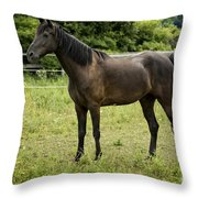 Majestic Stallion Horse In A Pasture Throw Pillow