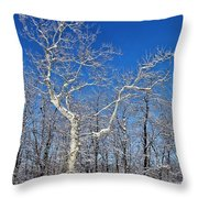 Majestic Sycamore In Winter Throw Pillow
