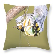 Malachite Butterfly Emerging 4 Of 6 Throw Pillow