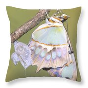 Malachite Butterfly Emerging 6 Of 6 Throw Pillow