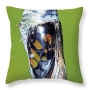 Malachite Butterfly Metamorphosis Throw Pillow