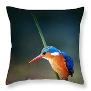 Malachite Kingfisher Throw Pillow
