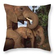 Malalka Mothering Orphans Tsavo Kenya Throw Pillow
