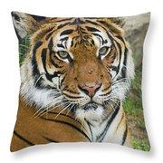 Malayan Tiger Throw Pillow