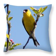 Male American Goldfinch Gathering Feathers For The Nest Throw Pillow