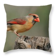 Male And Female Cardinal Throw Pillow
