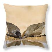 Male And Female Eurasian Blackcap Throw Pillow