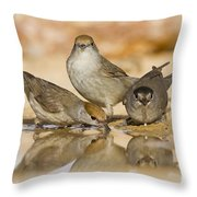 Male And Female Eurasian Blackcaps Throw Pillow
