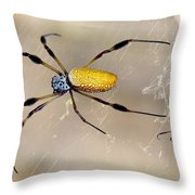 Male And Female Golden Silk Spiders Throw Pillow