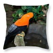 Male Andean Cock-of-the-rock Throw Pillow