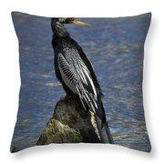 Male Anhinga Throw Pillow