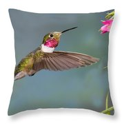 Male Broad-tailed Hummingbird Throw Pillow