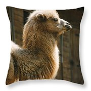 Male Camel Head Throw Pillow