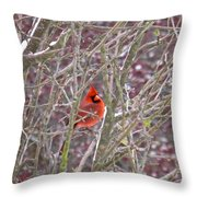 Male Cardinal Cold Day 2 Throw Pillow