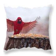 Male Cardinal Landing  Throw Pillow