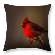 Male Cardinal Subdued Forest Background Throw Pillow