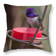 Male Costa Hummingbird Throw Pillow