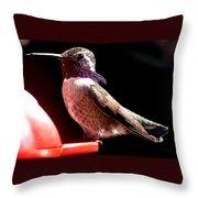Male Costa Hummingbird On Perch Throw Pillow