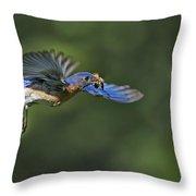Male Eastern Bluebird Throw Pillow