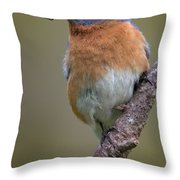 Male Eastern Bluebird With Spider Throw Pillow