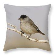 Male Eurasian Blackcap Throw Pillow