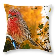 Male Finch In Autumn Leaves Throw Pillow