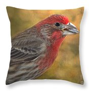 Male Finch With Seed Throw Pillow