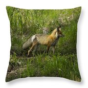 Male Fox   #3521 Throw Pillow