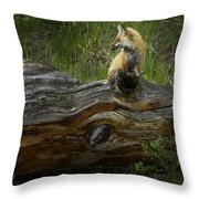 Male Fox   #3575 Throw Pillow