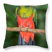 Male Golden-headed Quetzal Throw Pillow