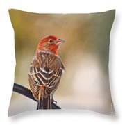 Male House Finch - Digital Paint And Frame Throw Pillow