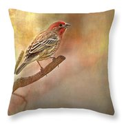 Male Housefinch Looking Up Throw Pillow