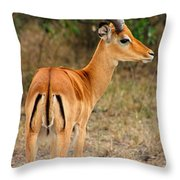 Male Impala With Horns Throw Pillow