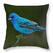Male Indigo Bunting Throw Pillow