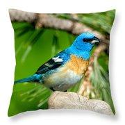Male Lazuli Bunting Passerina Amoena Throw Pillow