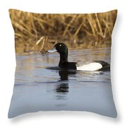 Male Lesser Scaup Throw Pillow