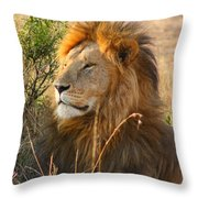 Male Lion Throw Pillow