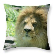 Male Lion Up Close Throw Pillow