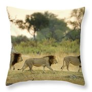 Male Lions At Dawn, Moremi Game Throw Pillow