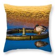 Male Mallard Duck Throw Pillow by Carolyn Marshall