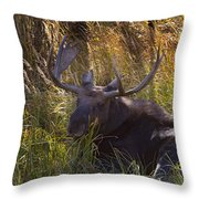 Male Moose   #3865 Throw Pillow