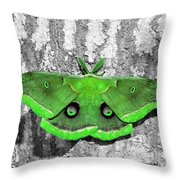 Male Moth Green Throw Pillow by Al Powell Photography USA