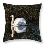 Male Mute Swan Throw Pillow