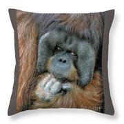 Male Orangutan  Throw Pillow