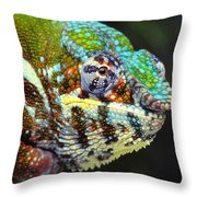 Male Panther Chameleon Furcifer Throw Pillow