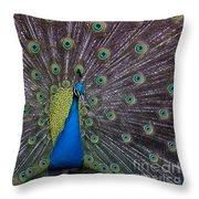 Male Peacock   #9053 Throw Pillow