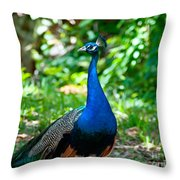 Male Peacock Throw Pillow