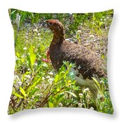 Male Ptarmigan Along Savage River Trail In Denali Np-ak Throw Pillow