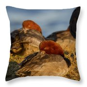Male Readhead Duck Throw Pillow