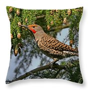 Male Red-shafted Northern Flicker Throw Pillow